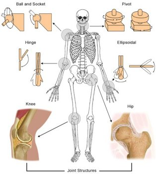 full body joint diagram full body diagram